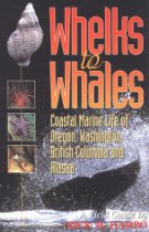 Whales of Pacific Ocean