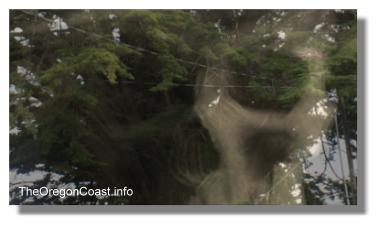 The ghost of Harrison G. Blake in the Monterey Cypress tree
