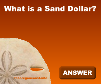 What is a Sand Dollar